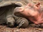 Hippo and Tortoise