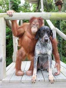 Orangutan and Dog friends